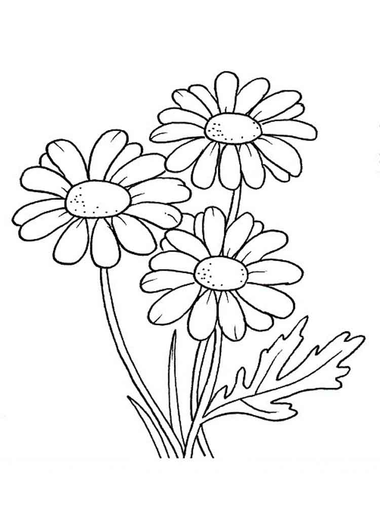 Three Daisy Flowers Flower Coloring Page