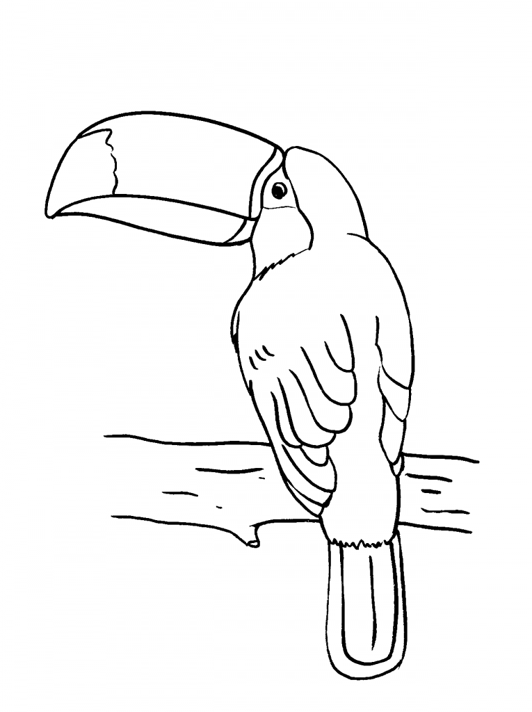 Toucan Bird Coloring Pages