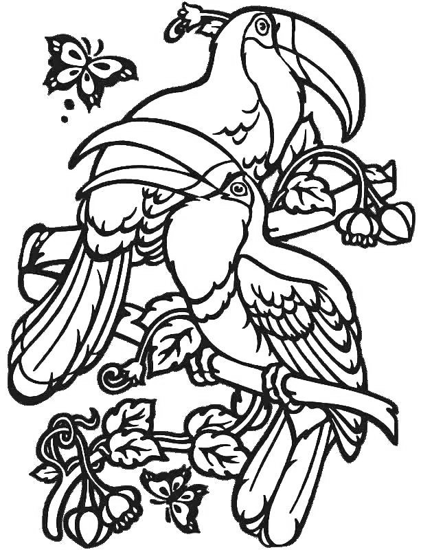 Toucan Birds Coloring Pages