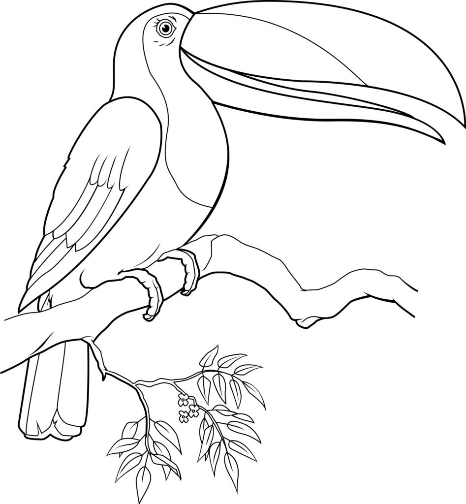 Toucan Coloring Page Printables