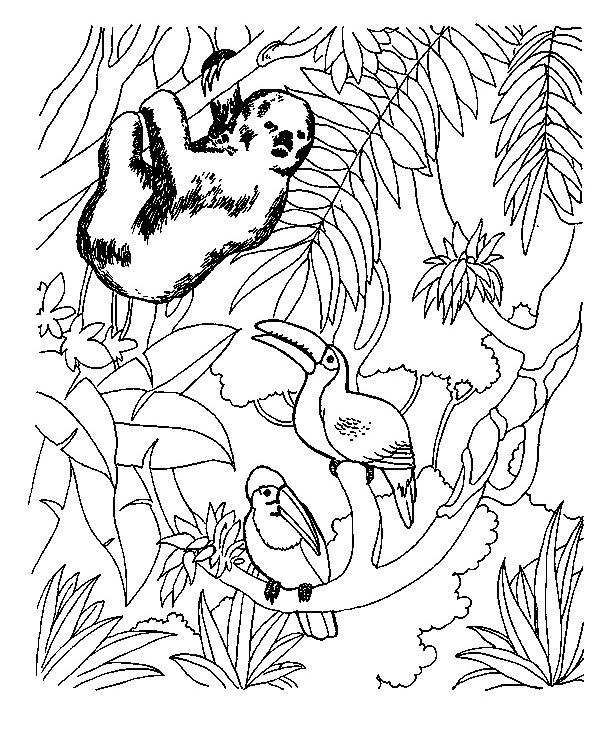 Toucan Printable Coloring Pages