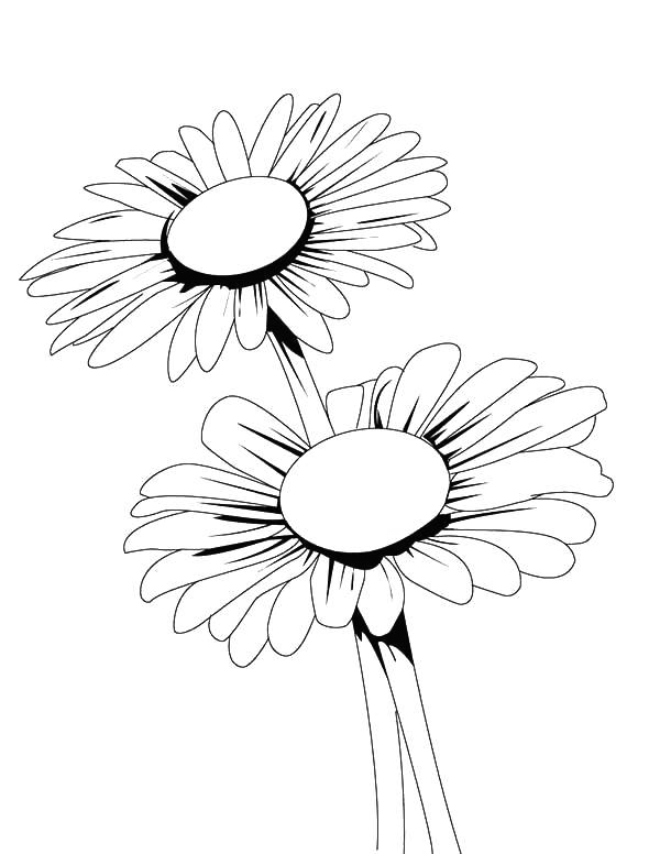 Two Daisy Flowers Flower Coloring Page