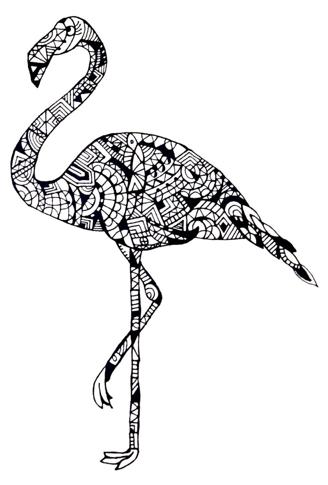 Flamingo Coloring Pages Best Coloring Pages For Kids