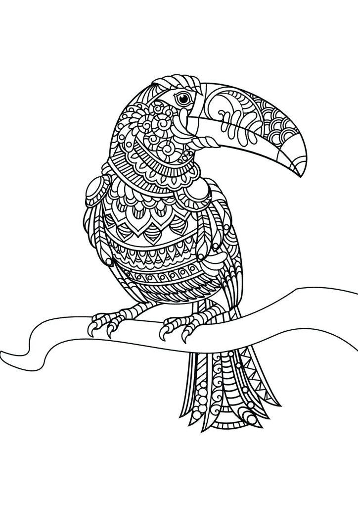 Zen Toucan Coloring Pages