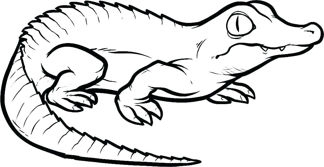 Reptile Coloring Pages - Best Coloring Pages For Kids