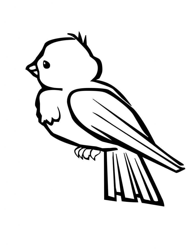 Baby Robin Bird Coloring Page