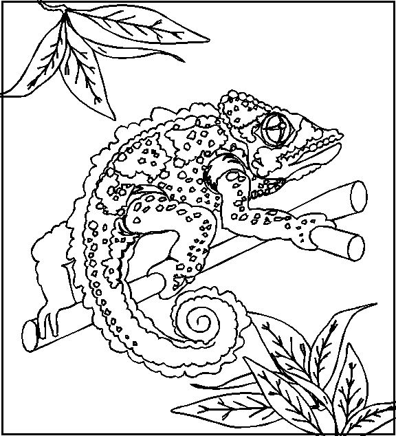 Chameleon Reptile Coloring Page