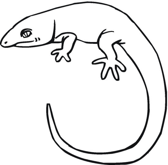 Reptiles coloring pages | Free Coloring Pages | 538x550