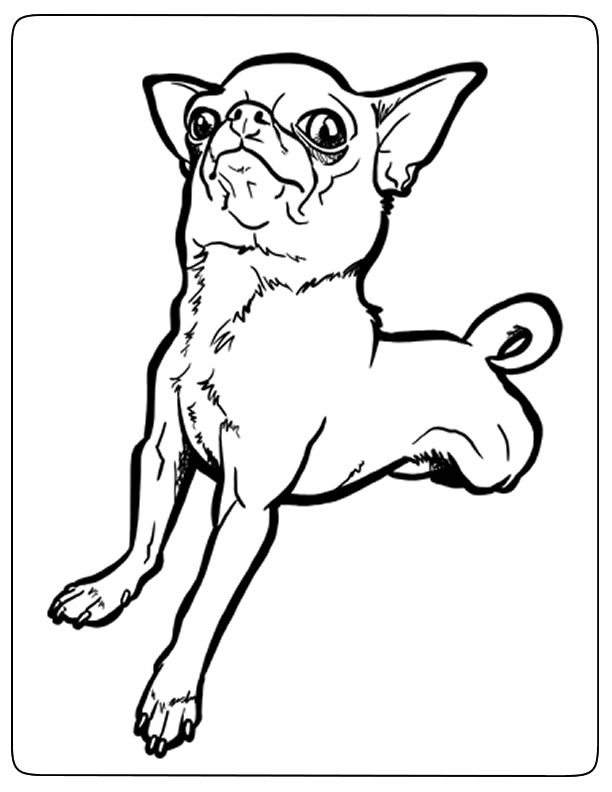Funny Chihuahua Dog Coloring Pages