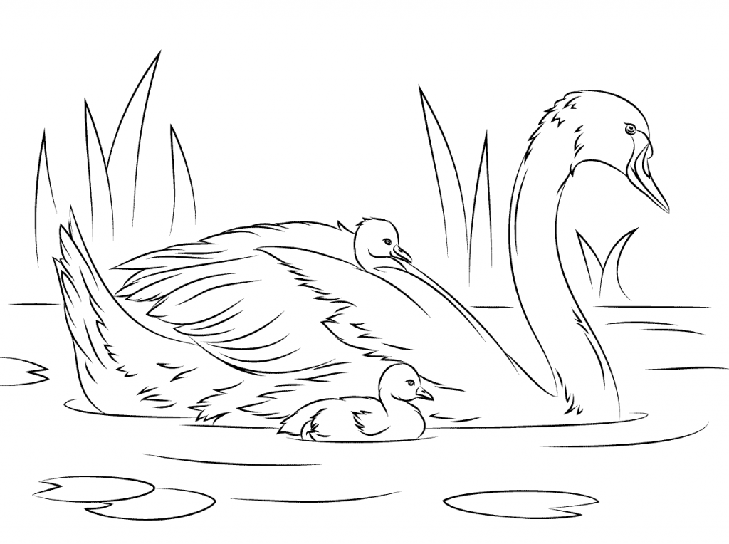 Mother And Baby Swans Coloring Page