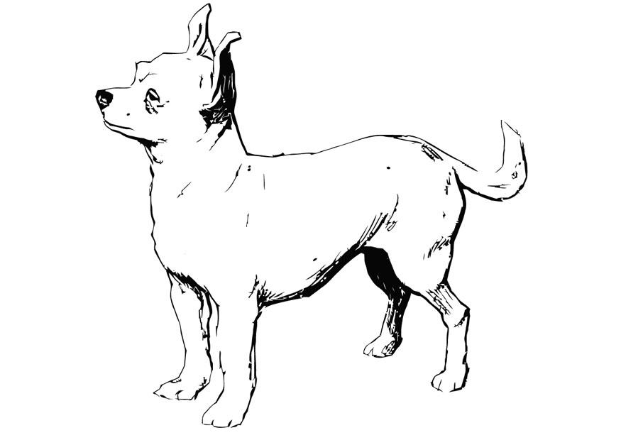 Realistic Chihuahua Coloring Page