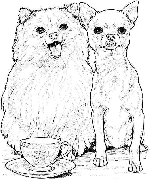 Realistic Chihuahuas Coloring Pages