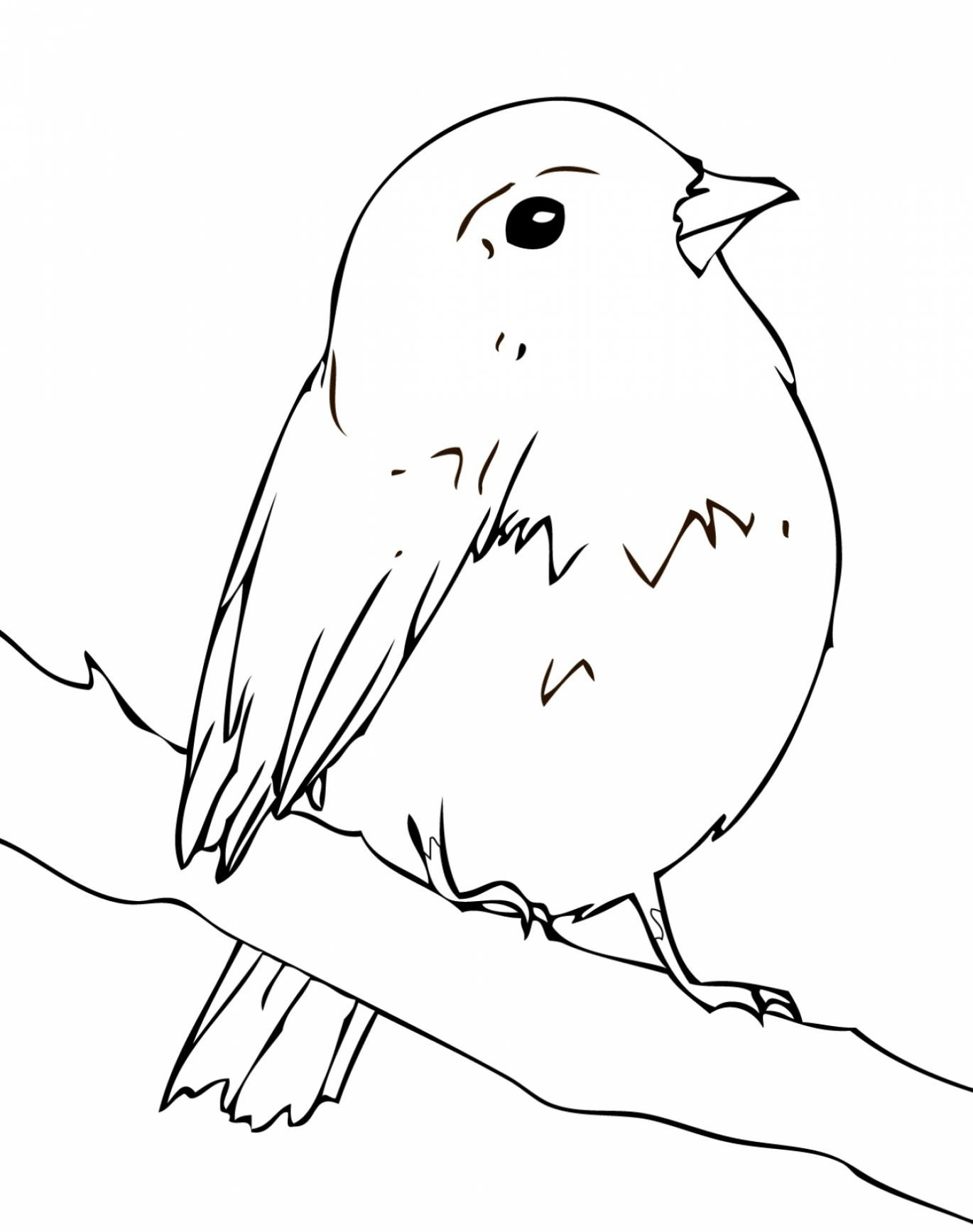 Robin Coloring Pages - Best Coloring Pages For Kids