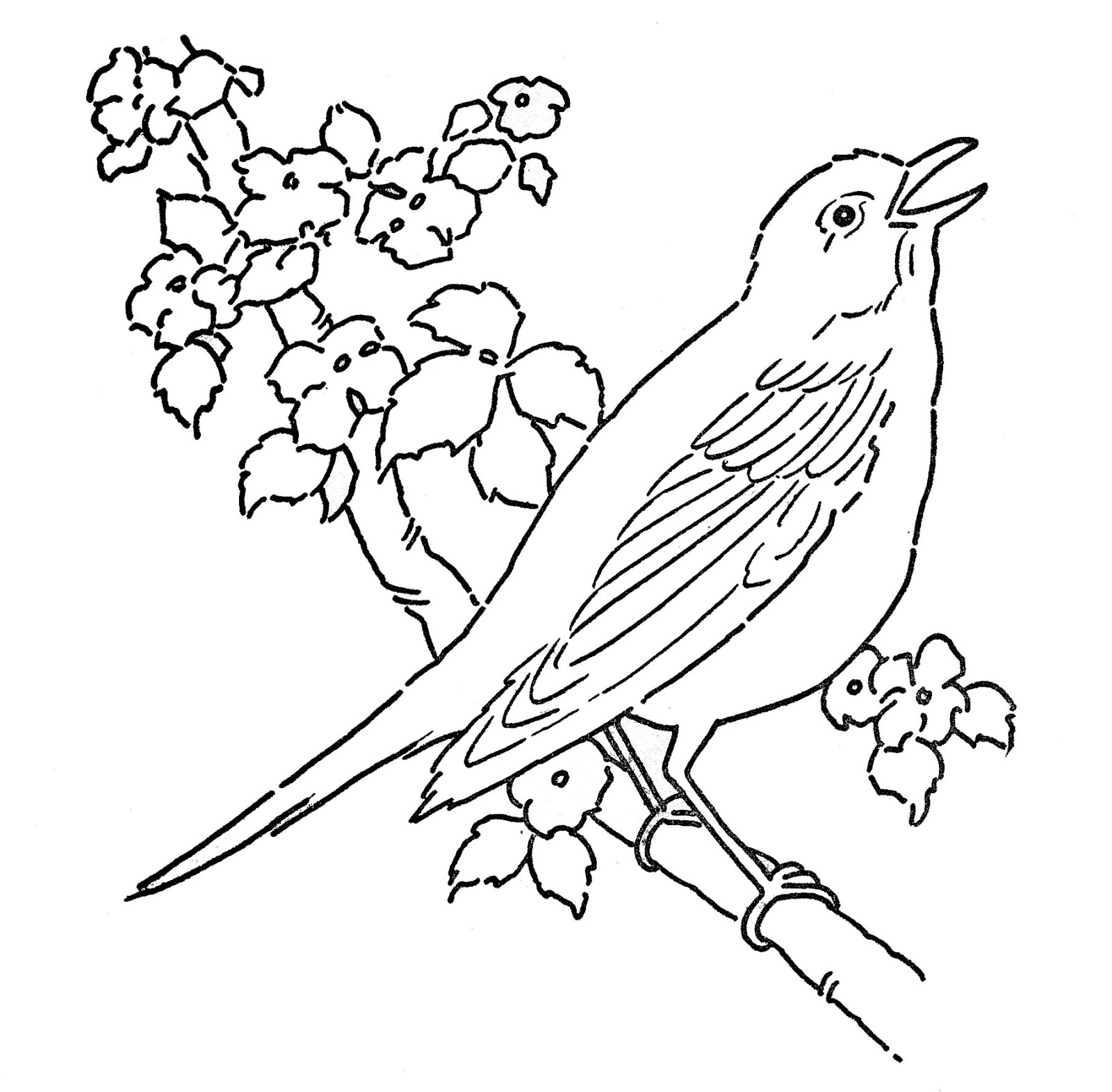 - Robin Coloring Pages - Best Coloring Pages For Kids