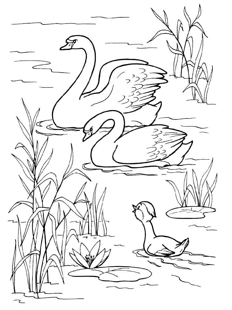 Swan Water Scene Coloring Page