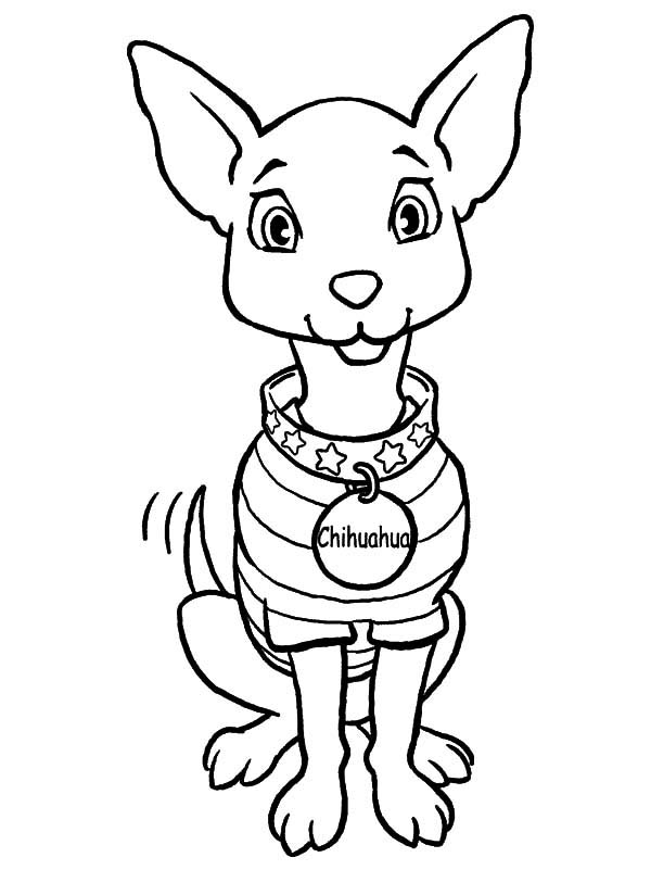 Sweet Chihuahua Pet Coloring Pages