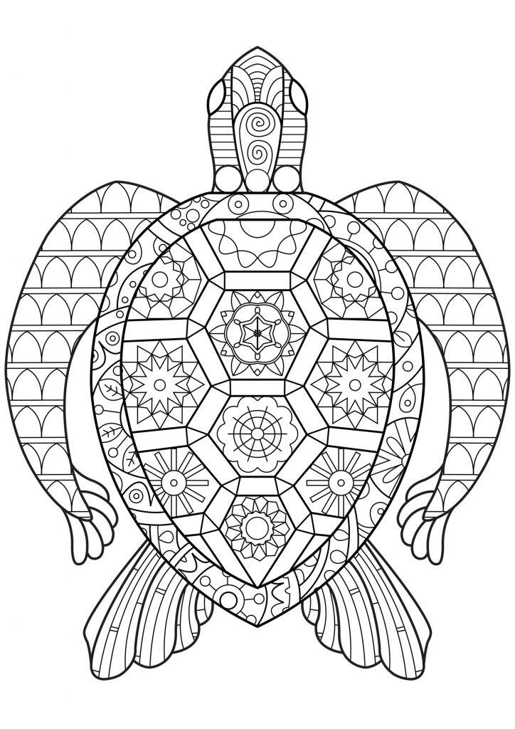 Zen Turtle Pattern Reptile Coloring