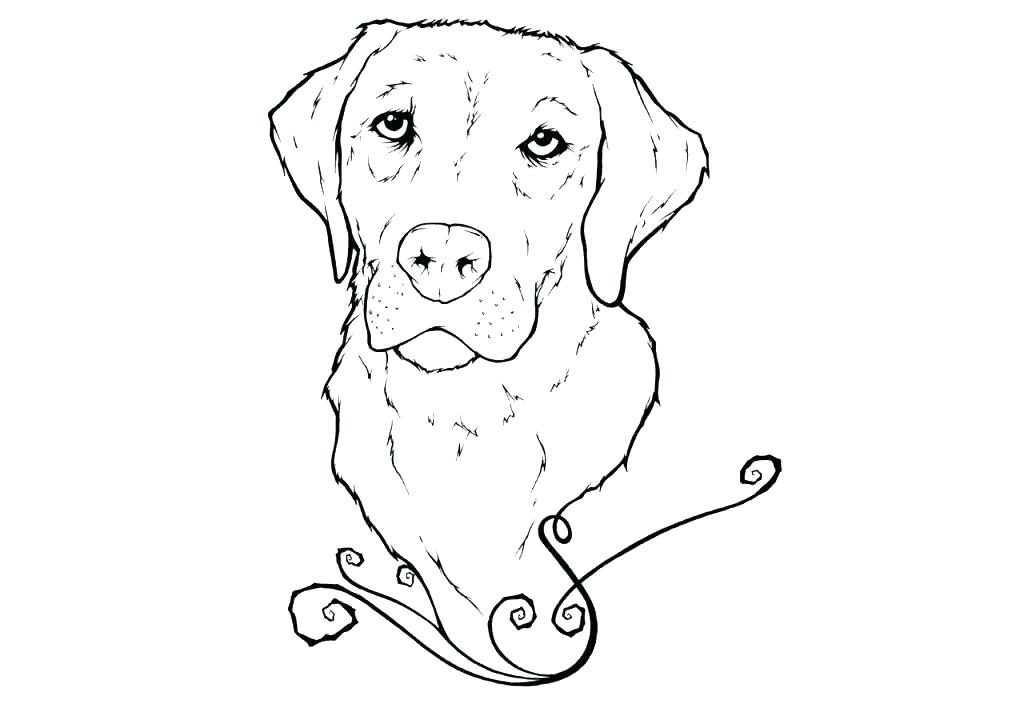 Adult Golden Retriever Coloring Pages