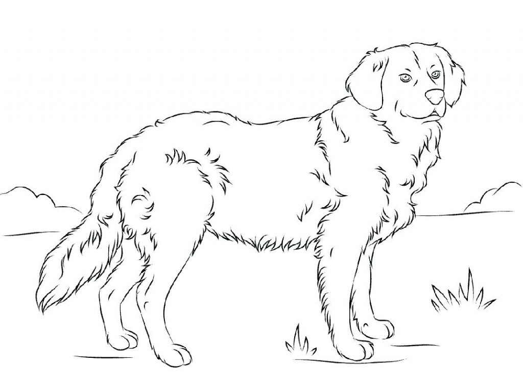 Adult Golden Retriever Scene Coloring Page