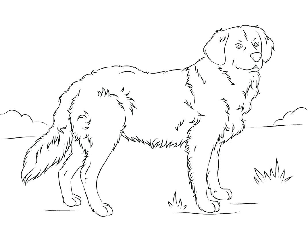 Golden Retriever Coloring Pages - Best Coloring Pages For Kids