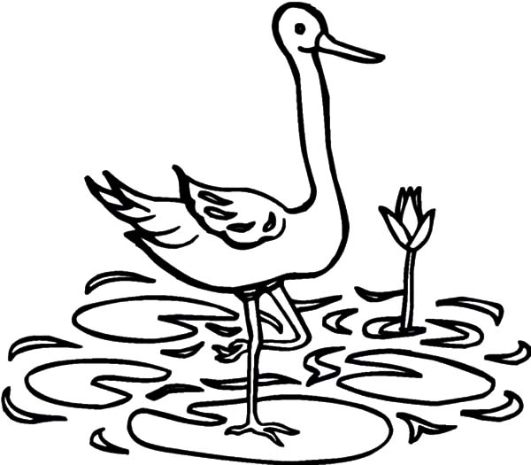 Crane In Water Coloring Page