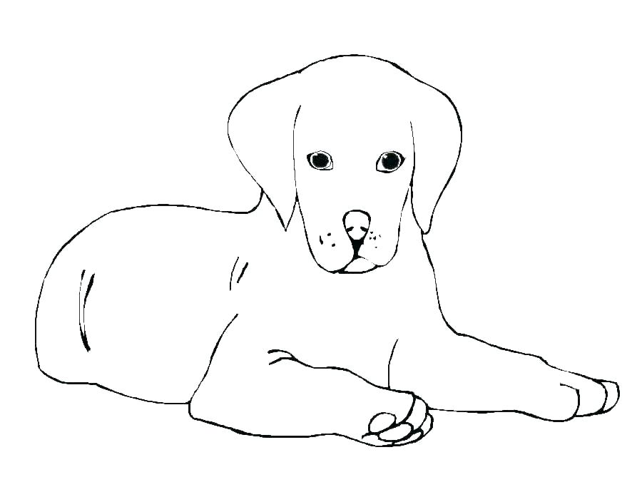 Cute Golden Retriever Coloring Pages