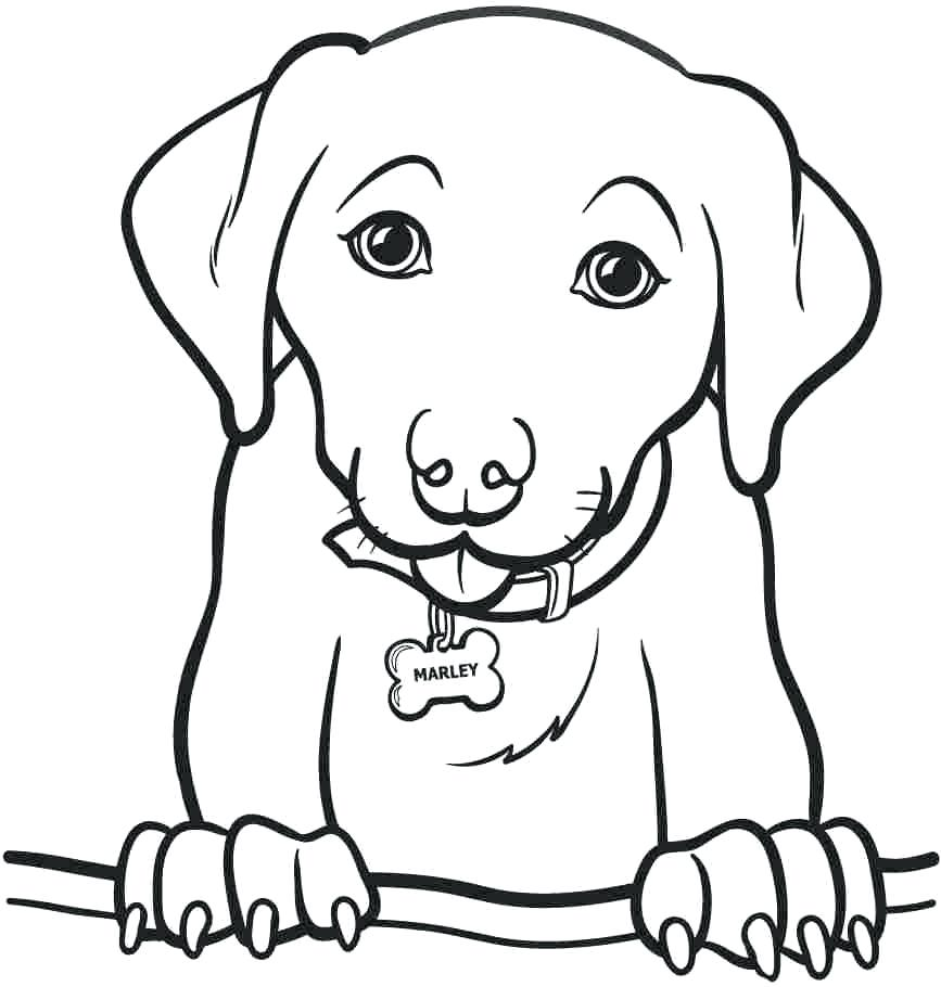 Cute Golden Retriever Puppy Coloring Page