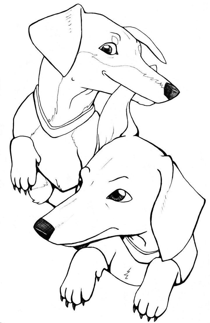 Dachshund Coloring Pages - Best Coloring Pages For Kids