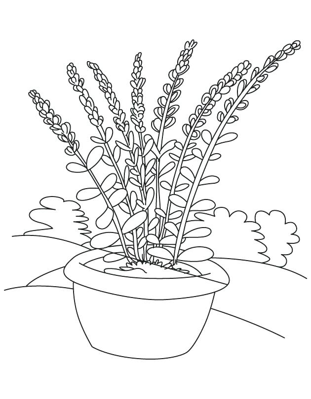 Flower Pot Free Coloring Pages
