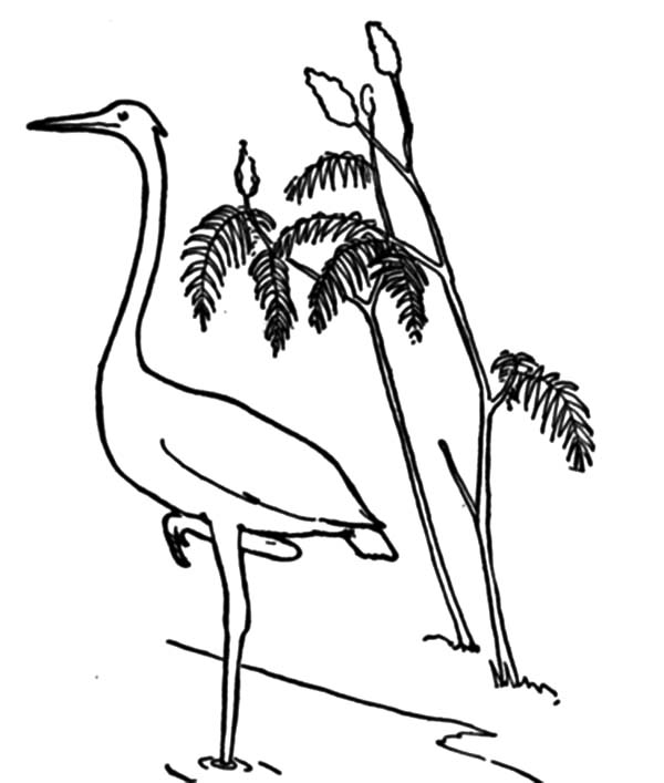 Natural Crane Coloring Pages