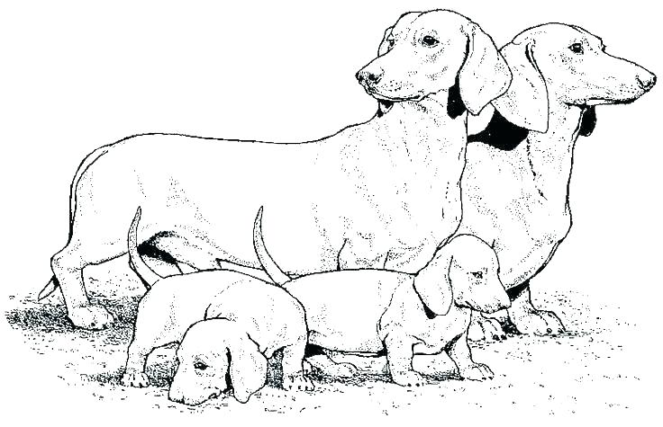 Realistic Dachshund Coloring Pages