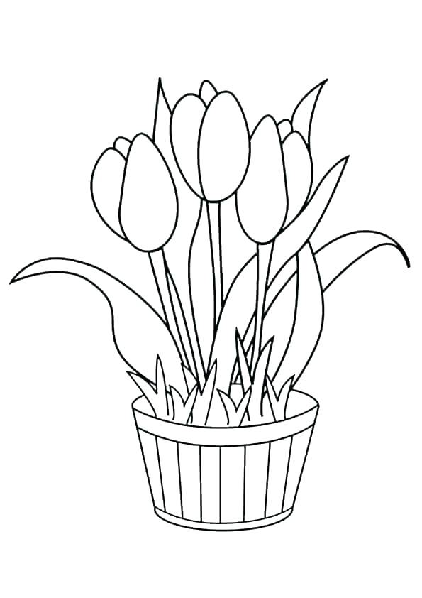 Tulips Flower Pot Coloring Pages