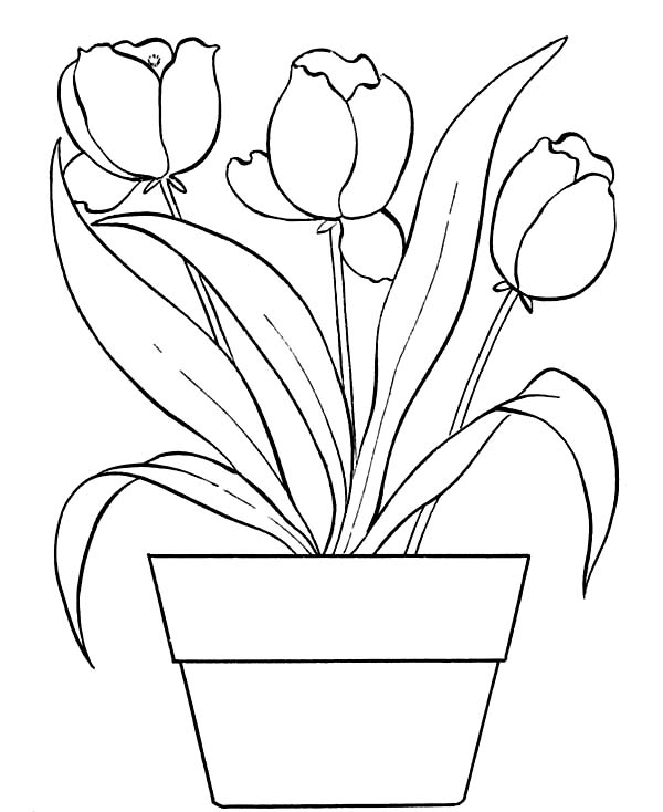 Tulips In Flower Pot Coloring Page