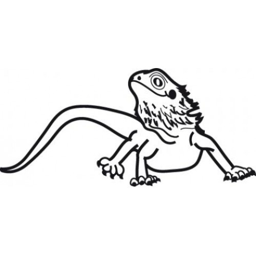 Cute Bearded Dragon Coloring Pages