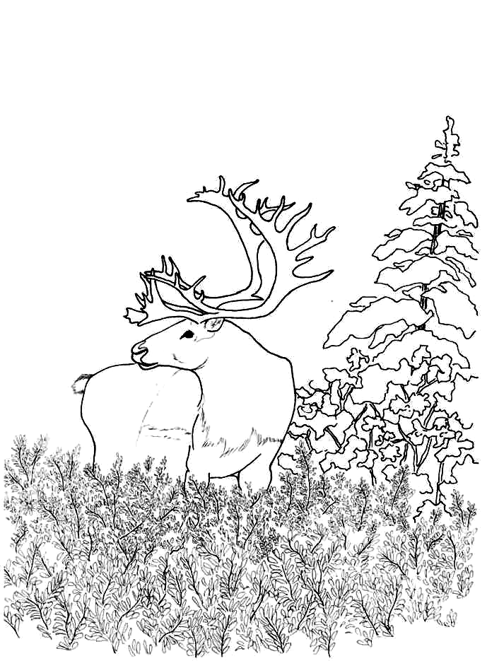 Deer In The Forest Coloring Page