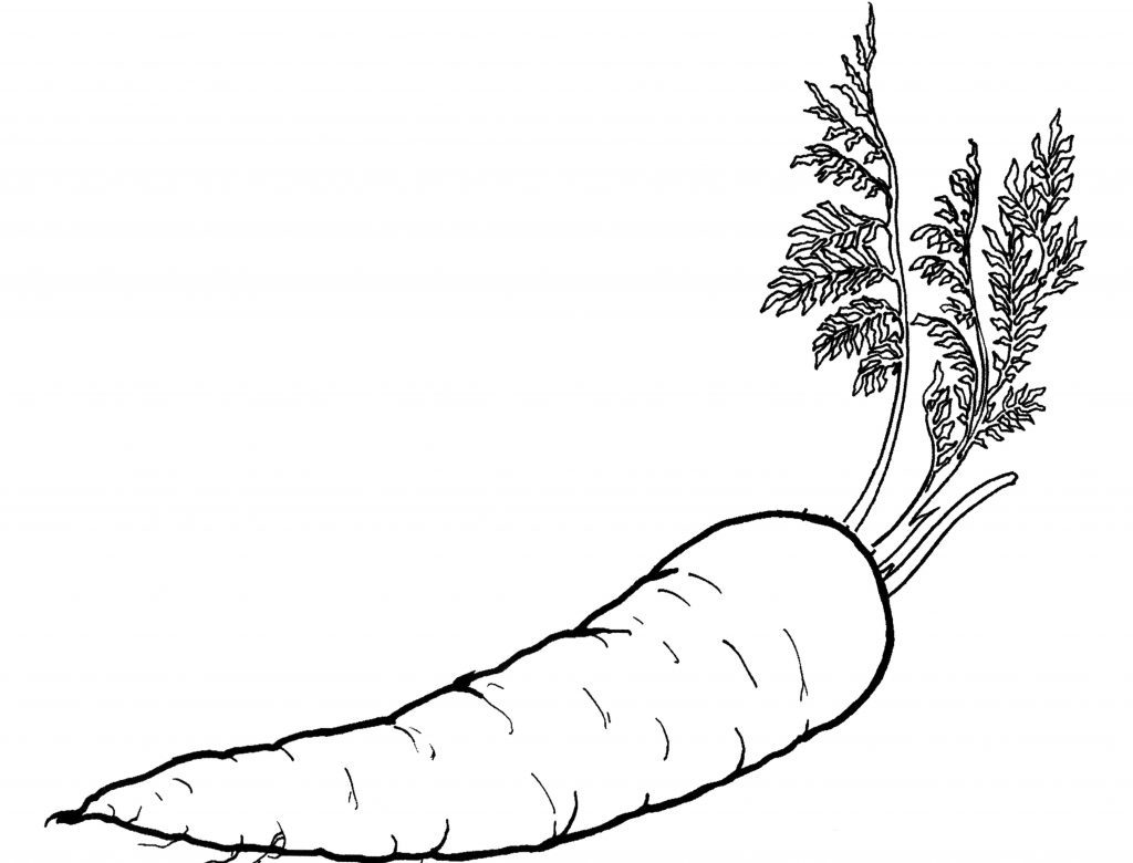 Easy Carrot Coloring Page