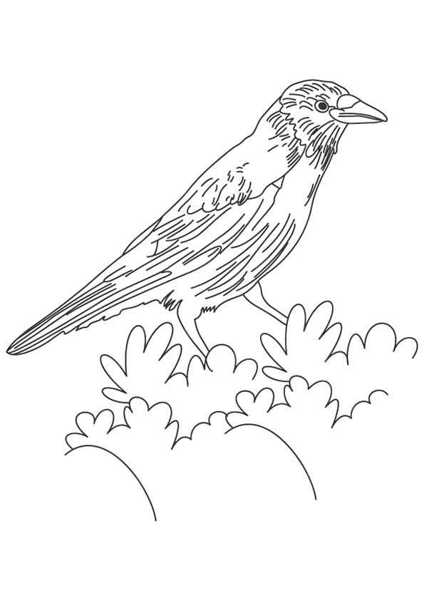 Crow On A Bush Coloring Page