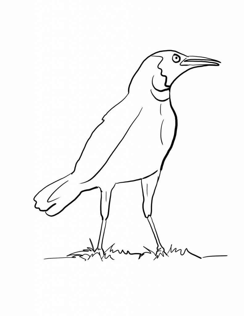 Easy Crow Coloring Page