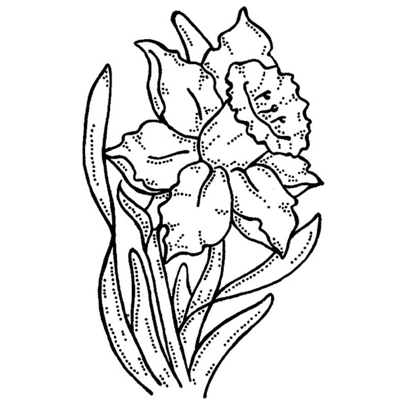 Daffodil Coloring Page