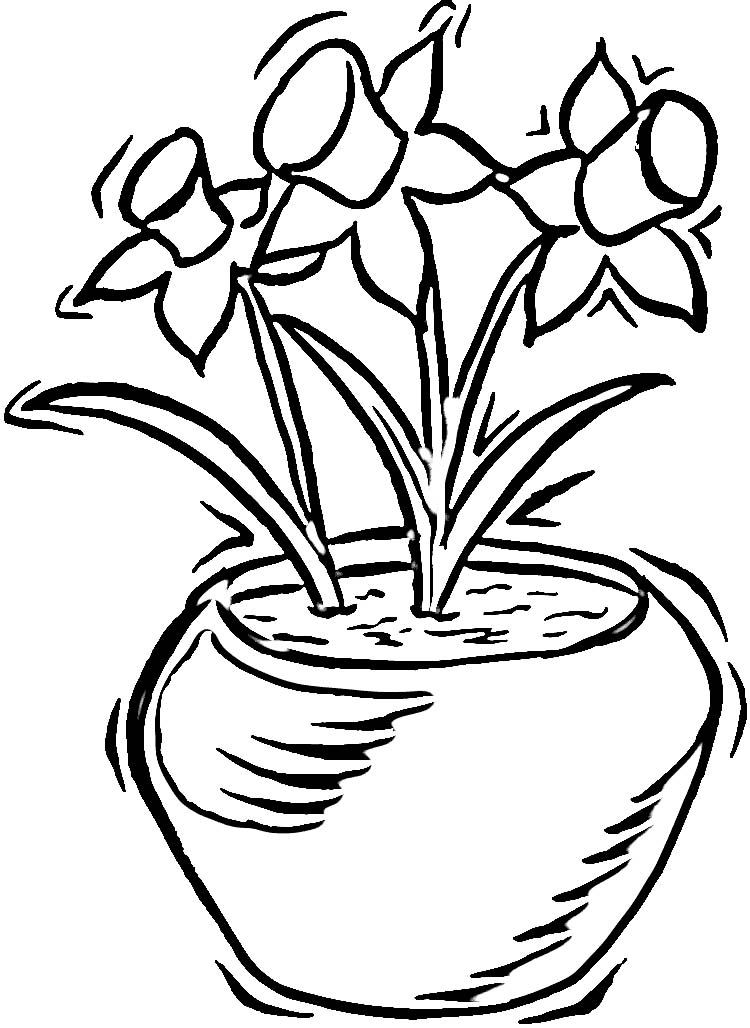 Pot Of Daffodils Coloring Page
