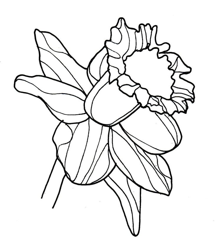Pretty Daffodil Coloring Pages