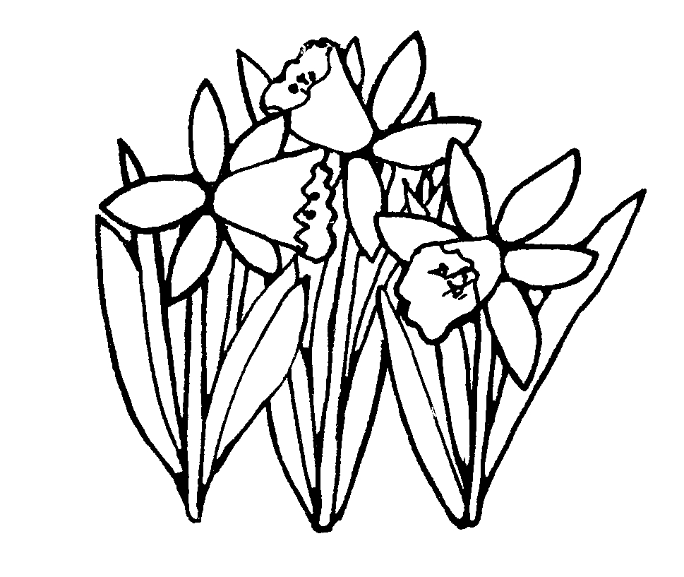 Three Daffodils Coloring Page