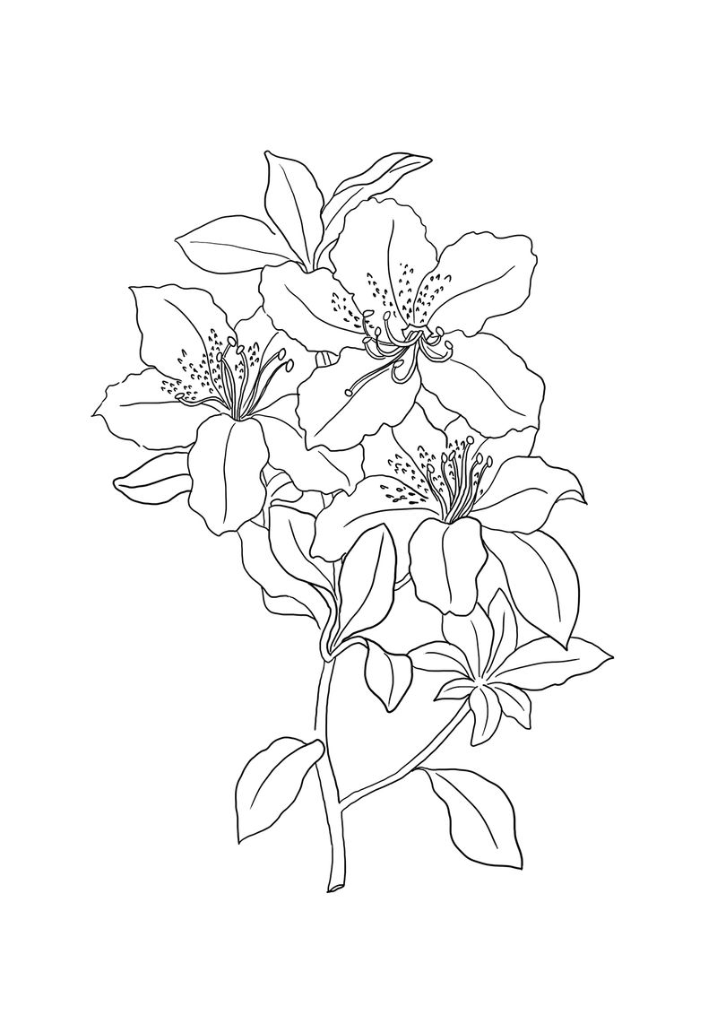 Beautiful Lilies Coloring Pages