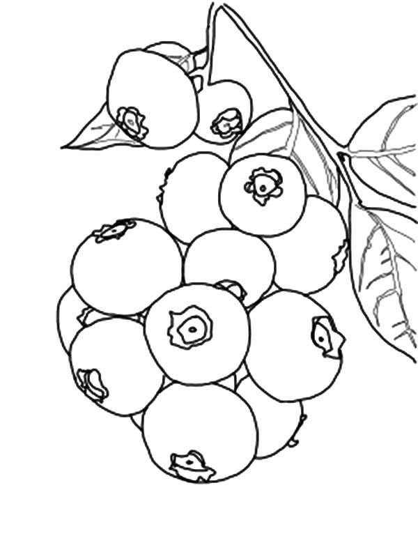 Blueberry Bunch Coloring Page