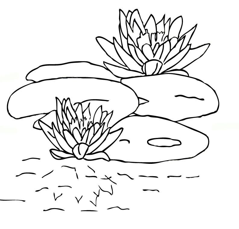 Water Lily Printable Coloring Pages