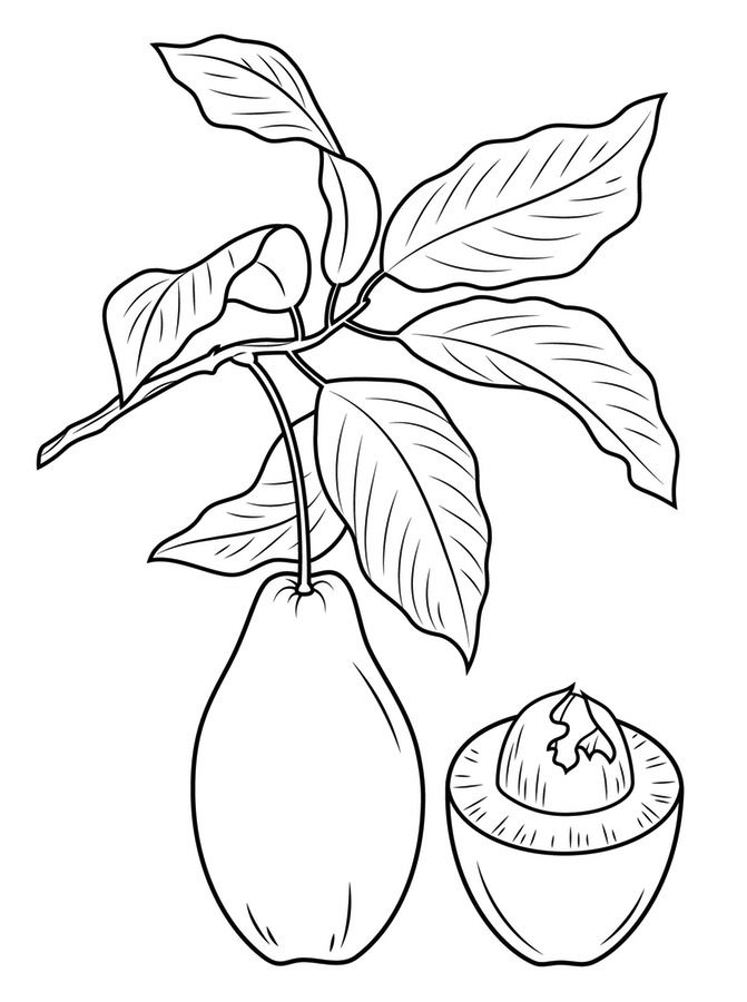 Avocado Tree Coloring Pages