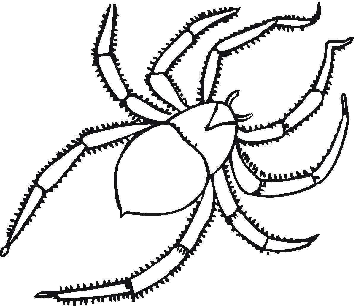 Furry Tarantula Coloring Pages