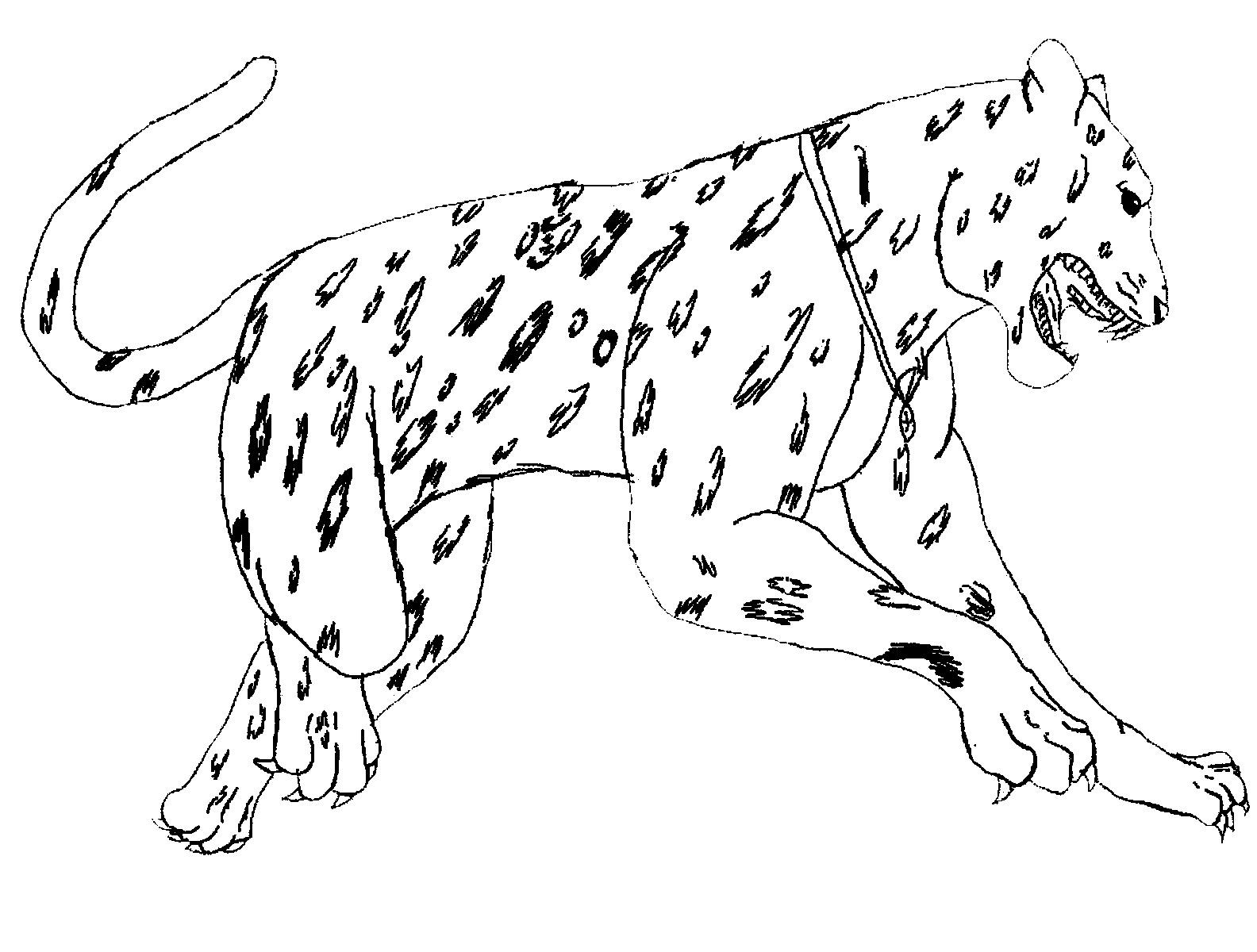 Jaguar Spots Coloring Page