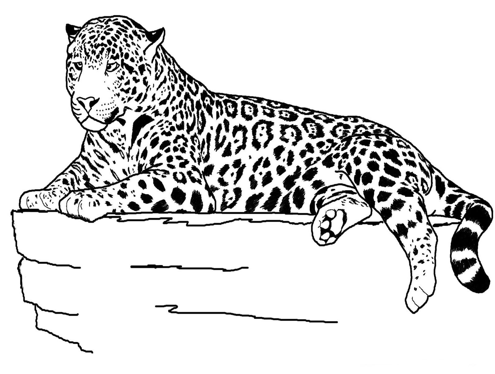 Jaguar On Perch Coloring Page