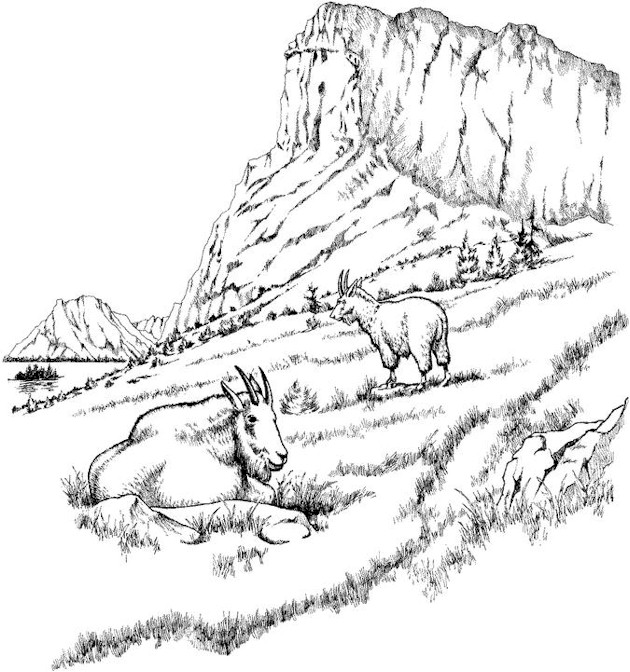 Mountain And Sheep Landscape Coloring Pages
